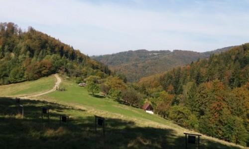 POLSKA / Beskid �l�ski / Na szlaku z Or�owej na R�wnic� / JESIE�