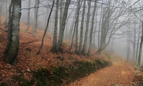 Zdjęcie POLSKA / Beskid Żywiecki / Pod Wielką Raczą / Na szlaku