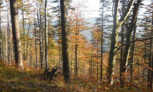 Zdjecie POLSKA / Beskid ��ski / Okolice Klimczoka / Jesienne klimat