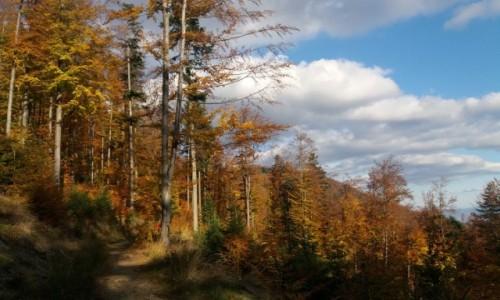 Zdjecie POLSKA / Beskid �l�ski / Klimczok / Jesie� w Beskid