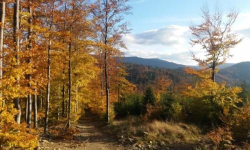 Zdjecie POLSKA / Beskid Śląski / Szlak  z Klimczoka na przełęcz Karkoszczonka / Jesień w Beskidach
