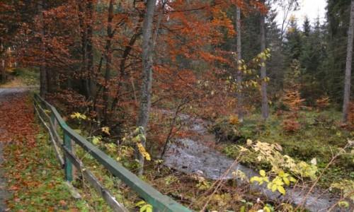 Zdjęcie POLSKA / Beskid Żywiecki / Pod Przysłopem / Droga na przełęcz