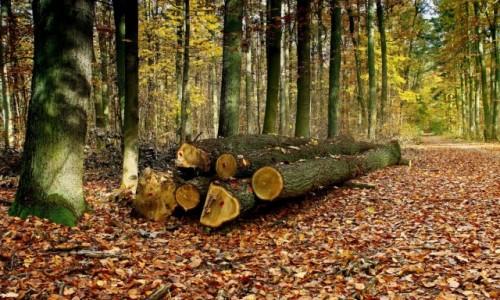 Zdjęcie POLSKA / kujawsko-pomorskiego / BoryTucholskie / Miejsce w leśnej ciszy