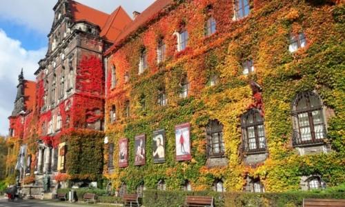 Zdjecie POLSKA / - / Wrocław / Barwy jesieni