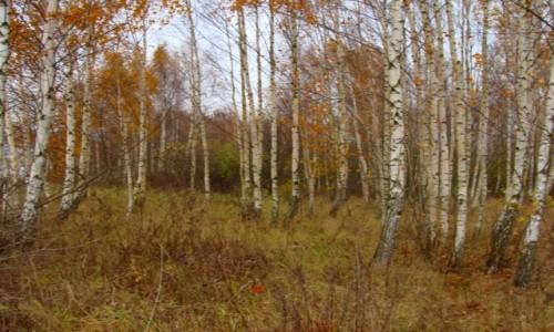 Zdjecie POLSKA / Mazury / Kraskowo / Kolory jesieni