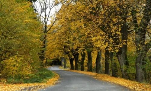 Zdjęcie POLSKA / dolnośląskie / Lądek / Jesienna droga