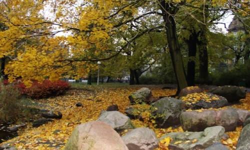 Zdjecie POLSKA / Wielkopolska / Poznań-Park Wilsona / Jesień w parku