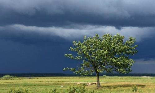 Zdjęcie POLSKA / Biebrzański Park Narodowy / Okolice Białego Grądu / Przed burzą