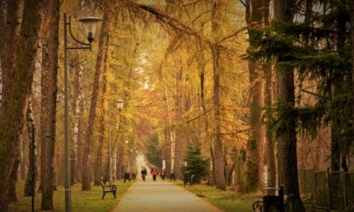 Zdjęcie POLSKA / malopolska / Rabka / w parku zdrojowym