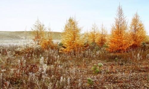Zdjęcie POLSKA / kujawsko-pomorskiego / BoryTucholskie / Bezdroża w kolorach jesieni