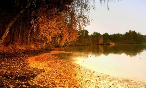 Zdjęcie POLSKA / kujawsko-pomorskiego /  Dolina Sandrowa Brdy. / Kolory jesieni