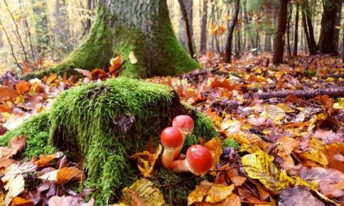 Zdjęcie POLSKA / mazowieckie / ... / Jesiennie i kolorowo