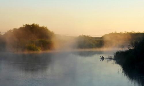 POLSKA / Biebrzański Park Narodowy / Biały Grąd / O świcie