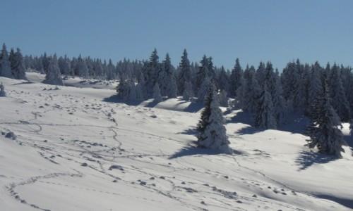 Zdjecie POLSKA / dolnośląskie / Międzygórze / Ślady na śniegu