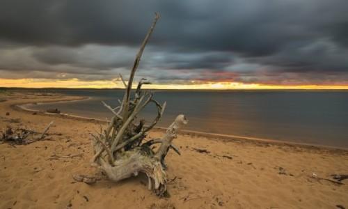 Zdjęcie POLSKA / pomorze  / Gdansk-Sobieszewo  / pochmurny zachod w rezerwacie przyrody