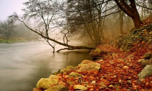 Zdjęcie POLSKA / Bory Tucholskie / Dolina Brdy / Mgła w Dolinie Brdy