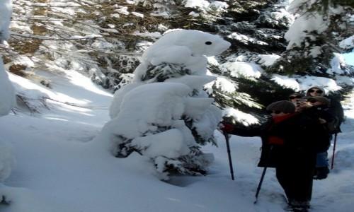Zdjęcie POLSKA / dolnoślaskie / Międzygórze / Spotkanie ze śnieżnym niedźwiedziem.