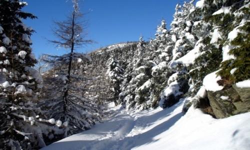 Zdjęcie POLSKA / dolnoślaskie / Międzygórze / Szlak na Śnieżnik