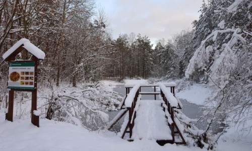 POLSKA / mazowieckie / Mienia / Zima w rezerwacie