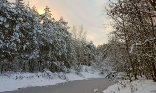 Zdjęcie POLSKA / mazowieckie / Mienia / Zima w rezerwacie