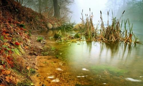 Zdjęcie POLSKA / Bory Tucholskie / Dolina Brdy / W mglistym terenie