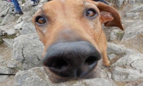 Zdjecie POLSKA / Masyw Śnieżnka / Śnieżnik / Całuj psa w nos