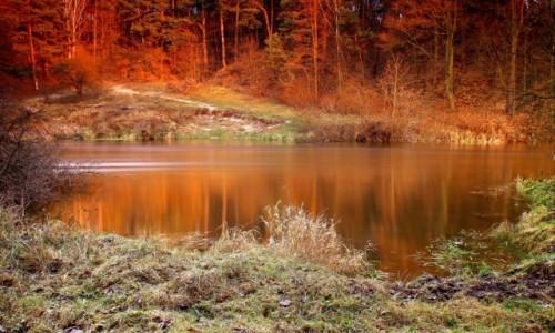 POLSKA / Bory Tucholskie / Dolina Brdy / Grudniowe promienie zachodzącego słońca