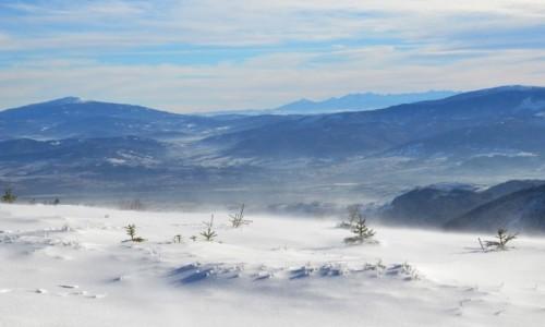 Zdjęcie POLSKA / Beskid Śląski / Skrzyczne / nieco wyżej