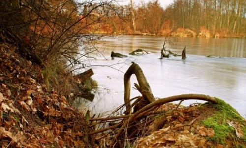"""Zdjęcie POLSKA / Bory Tucholskie / Dolina Brdy /  """"Z nurtem rzeki"""