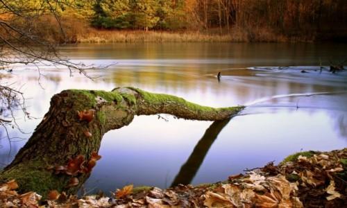 Zdjęcie POLSKA / Bory Tucholskie / Dolina Brdy / Siła Natury