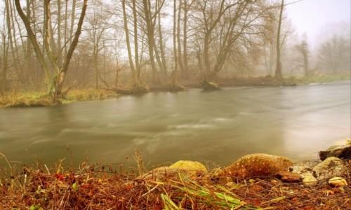 Zdjęcie POLSKA / Bory Tucholskie / Dolina Brdy / Rezerwat