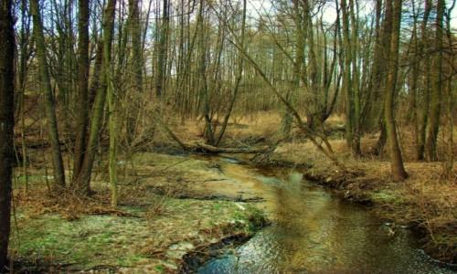 Zdjęcie POLSKA / województwo łódzkie / Lisowice / Lisowice-rzeka Mroga