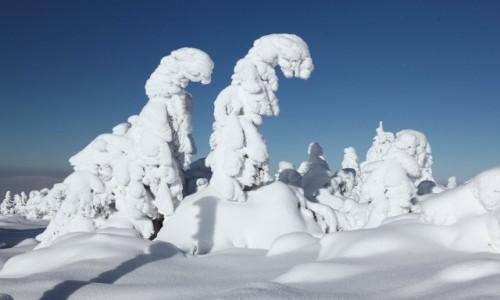 Zdjęcie POLSKA / Karkonosze / Śnieżka / Wędrowcy w bieli
