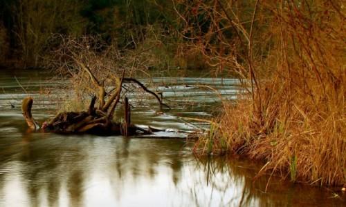 Zdjęcie POLSKA / Bory Tucholskie / Dolina Brdy / Z nurtem rzeki