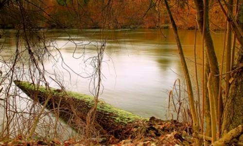 Zdjęcie POLSKA / Bory Tucholskie / Dolina Brdy /  W korycie rzeki