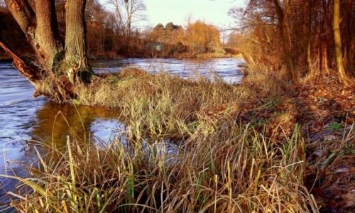 Zdjęcie POLSKA / Bory Tucholskie / Dolina Brdy / Królowa Kujawsko – pomorskich rzek