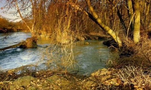 Zdjęcie POLSKA / Bory Tucholskie / Dolina Brdy / Przyroda w Dolinie Brdy
