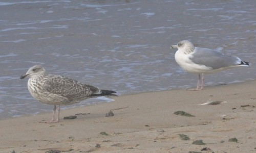 Zdjęcie POLSKA / Pomorskie / Rowy / Rowy, ptaki