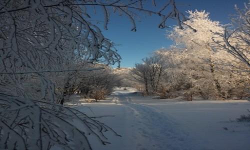 Zdjęcie POLSKA / beskid / kiczera  - osiemnaście stopni / piękna mroźna zima