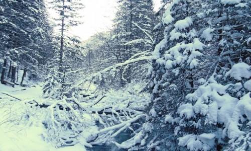 Zdjęcie POLSKA / Tatry / Dolina Strążyska / Bielszy odcień bieli