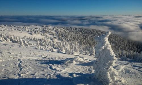 Zdjecie POLSKA / karkonosze / śnieżnik / mroźny Śnieżnik