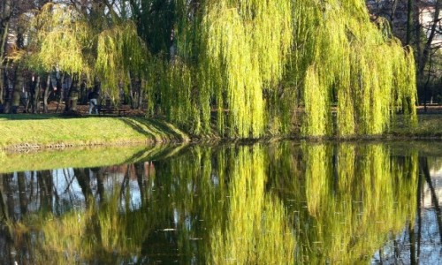 POLSKA / łódzkie / Piotrków Trybunalski / W dawnym ogrodzie botanicznym.