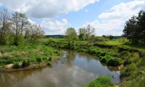 POLSKA / Mazowsze / okolice Stoczka / Zakola rzeki Wilgi