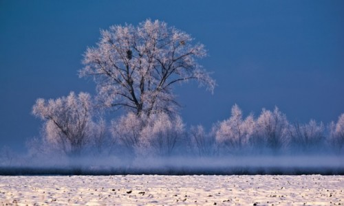 POLSKA / Warmia  / Braniewo  / zima na  warmii