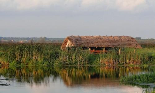 POLSKA / Podlasie / Waniewo / W dolinie Narwi.