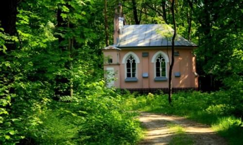 Zdjęcie POLSKA / Lubelszczyzna / Turów / Kaplica Św.Antoniego Padewskiego