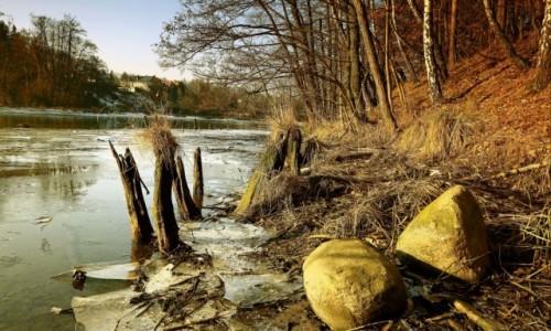Zdjęcie POLSKA / Bory Tucholskie / Dolina Brdy / Bagniste tereny