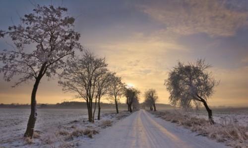 Zdjecie POLSKA / warmia  / Braniewo / Warmia zimą