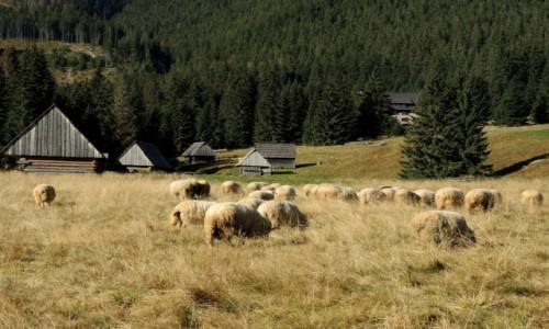 Zdjęcie POLSKA / Tatry Zachodnie / Dolina Chochołowska / Uprzejme