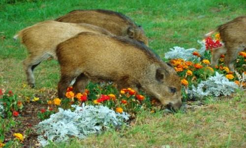 Zdjecie POLSKA / województwo pomorskie / Krynica Morska / Krynica Morska-lubimy kwiatki
